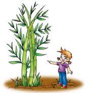 ชีวิตพืช